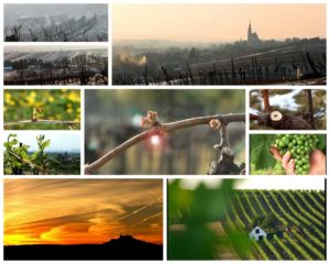 Weinviertel DAC: four Seasons